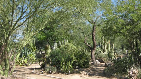 Glendale's Xeriscape Garden