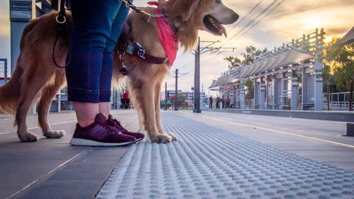 Service Dog on platform